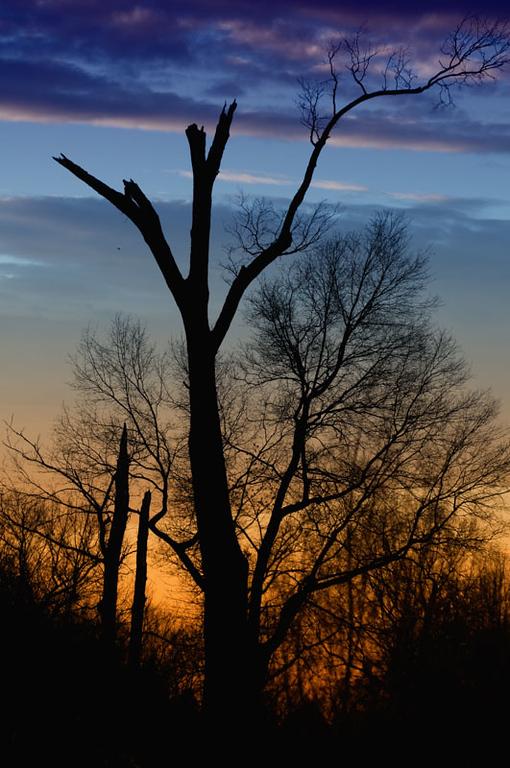 Tree at Curles Neck Farm, Richmond, VA