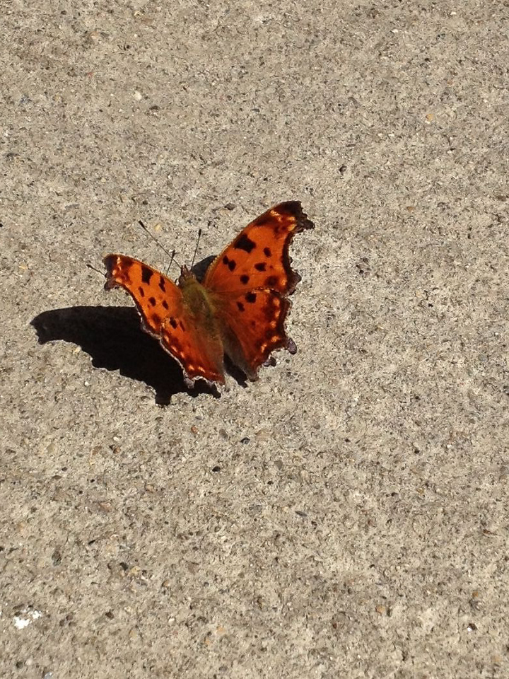 Butterfly at rest stop.