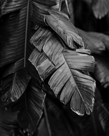 20170211_palm-leaf-bw_01_16x20_sharp