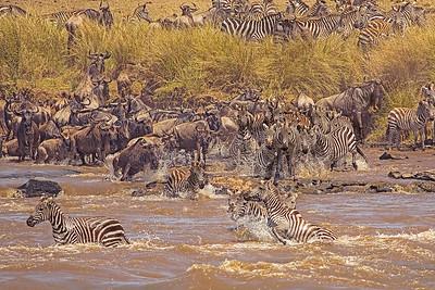 Zebra Crrossing