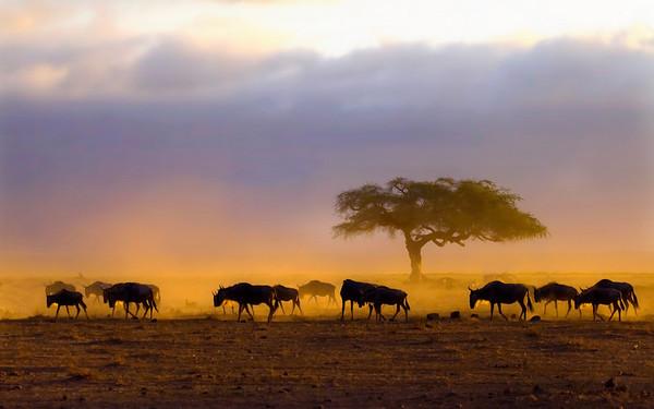 Amboseli Procession at Dawn