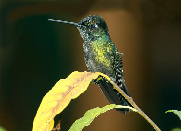 Before - Hummingbird