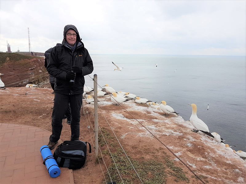 2019 - Helgoland: seit langem mal wieder bei den Basstölpeln. April mit Schneefall.