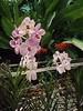 1997 05-xx - Flower at arboretum