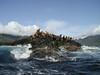 2003-06-19 - Sea lions 01