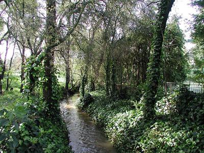2003-03-15 - Norris creek