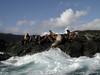 2003-06-19 - Sea lions 04