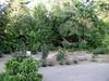 2003-04-18 - Norris rose garden