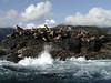 2003-06-19 - Sea lions 02