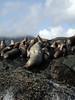 2003-06-19 - Sea lions 03