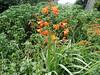 2004-07-03 - Flower