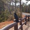 2005-10-17 - Friendly bird at Bryce Cnyn, UT