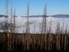 2007 08 24 Yellowstone Fog in burned out area