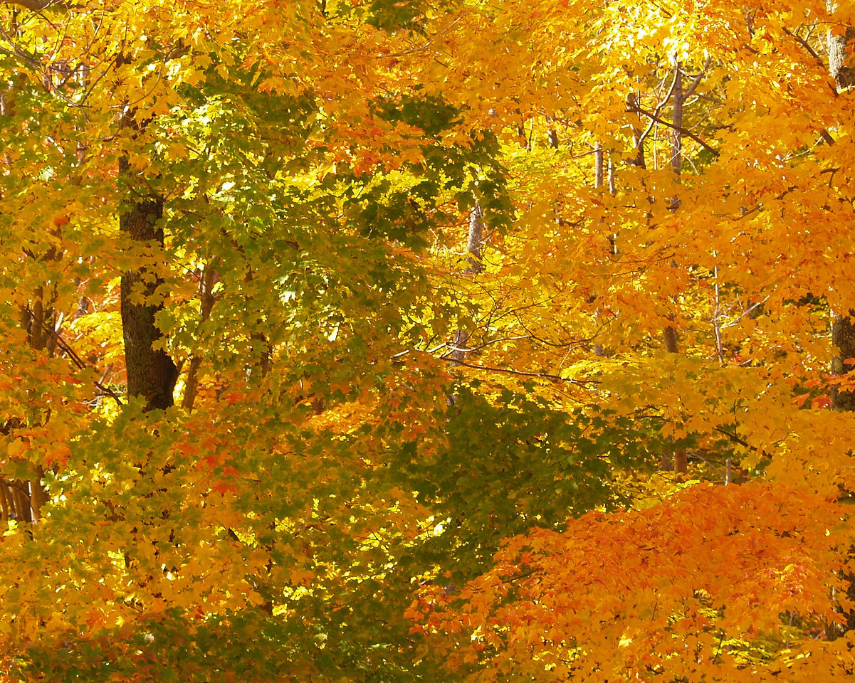 2009-10-10 - Trees in the Adirondack Park, NY, USA