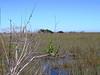 2009-12-29 - Florida Everglades National Park