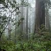 2010-03-25 - Lady Bird Johnson Grove at Redwoods National Park, CA, USA