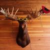 2010-07-26 - Moose in Leadville home