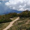 2010-07-25 - Rocky Mtn Nat'l Park - Ute Trail (12)