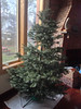 2012-12-15 - Christmas tree (before decoration)