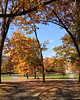 2012-10-26 - Fall color peaking on the Arts Quad at Cornell University, Ithaca, NY, USA