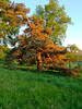 2012-05-17 - Tree on LIebe Slope at Cornell University in Ithaca, NY, USA