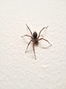 2012-12-08 - Spider on the wall at 906 Triphammer Road