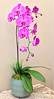 2013-07-31 - Orchid in the lobby of Portico Group building