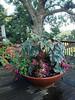 2013-07-05 - Another Pamela Atkins flower pot