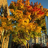 2013-10-17 - Seattle Fall Color