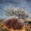 2013-12-30 - Results of fog ice south of Susanville, CA, USA