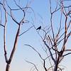 2014-05-30 - Bird in aluminum tree at Olympic Sculpture Park