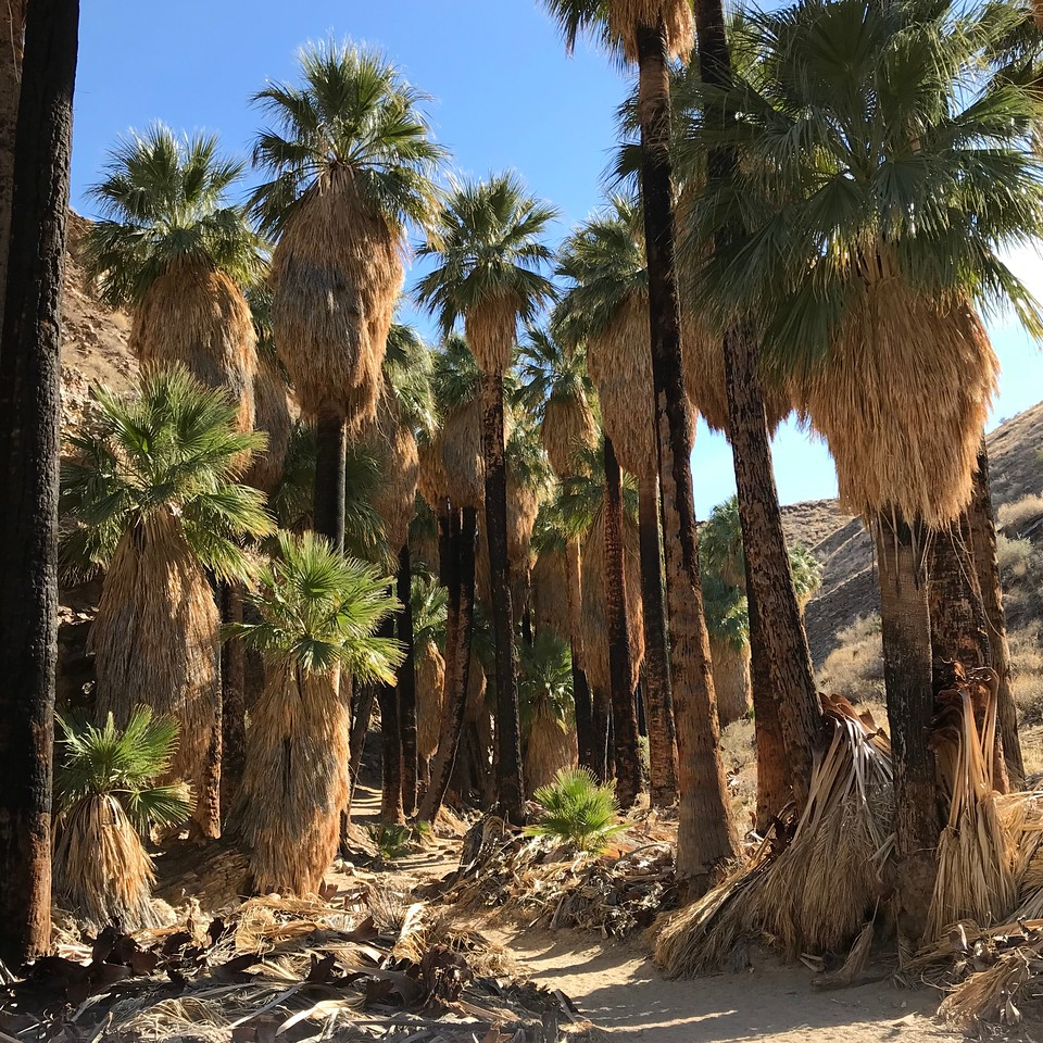 2018-01-01 - Photo 04 - Agua Caliente Indian Canyons