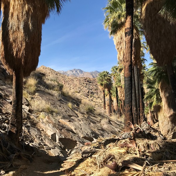 2018-01-01 - Photo 07 - Agua Caliente Indican Canyons