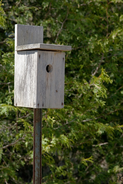 Bird House copy