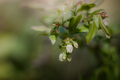 wildflowers-6