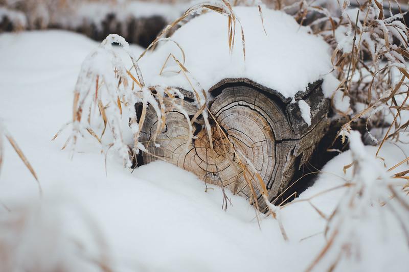 2019_12_23_heart log frost_3-3