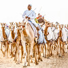 Camel Race in Dubai