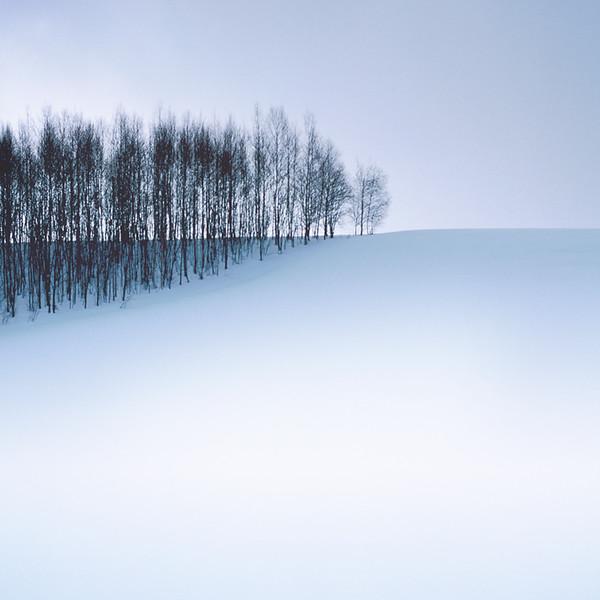 Hillside Forest