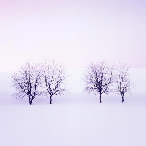 Four Trees at Biei-cho