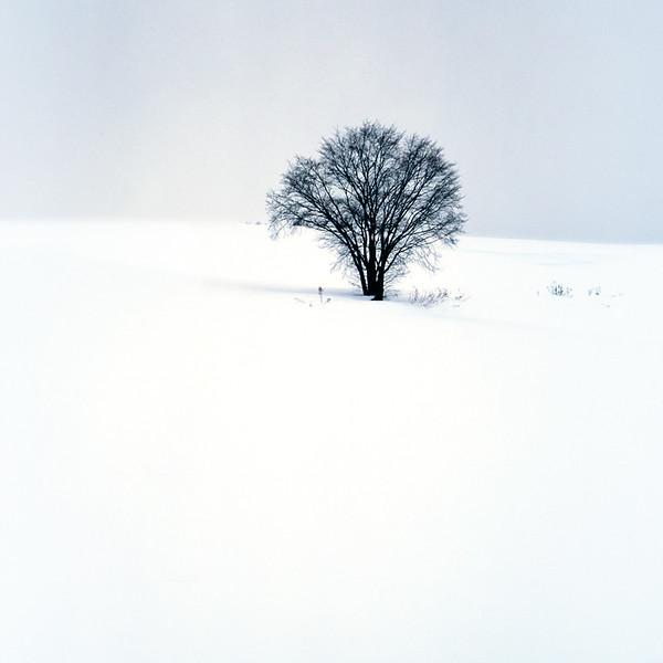 Biei-cho Tree Portrait