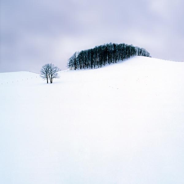 Ubetsu-cho Forest and Tree Study III