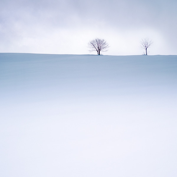Two Trees at Biei-cho