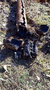 Orangeburg sewer pipe full of roots