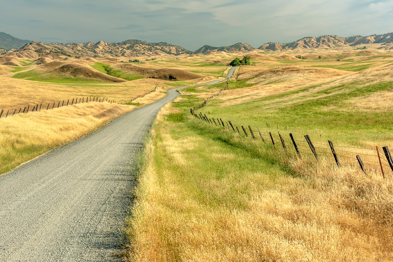 Transition to Summer, Newville Road, Tehama County, CA