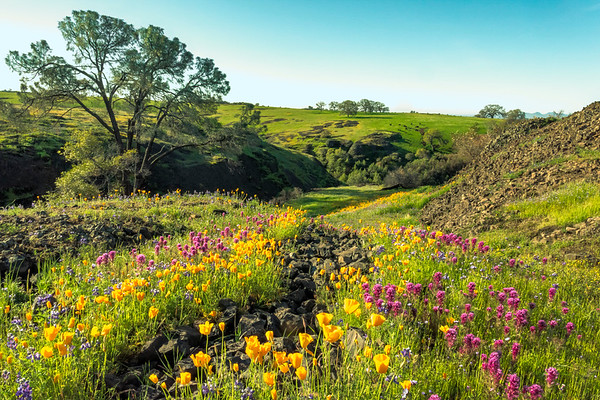 Early Morning on Table Mountain, Butte County, CA
