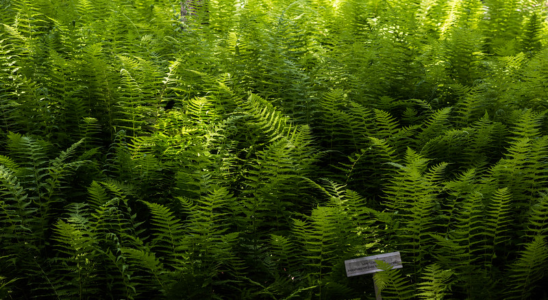 Same Ferns, Another Day