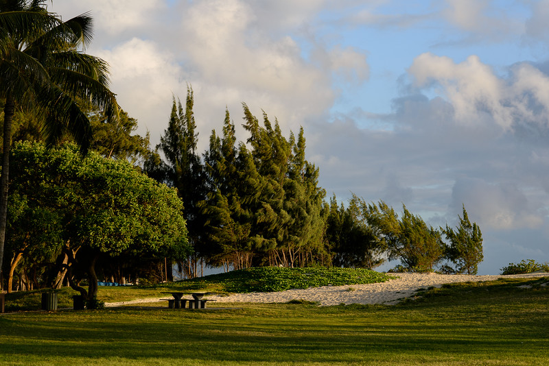 Ironwoods at Kailua Beach Park - Honorable Mention (Oct. 2014)