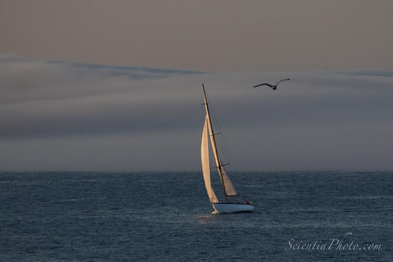 Sail & Gull Near Perkins Cove, Maine