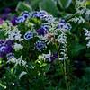 Five Gables Inn Flowers