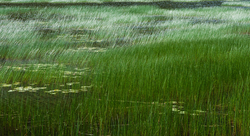 """Green Waves of Reeds? Lacks the Poetry of """"Amber Waves of Grain"""", But Just as Beautiful"""